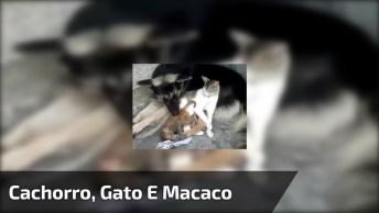 Cachorro, Gato E Macaco, Olha Só Que Amor Entre Estes 3 Amiguinhos!