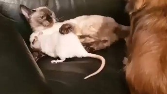 Cachorro, Gato Erato De Estimação Brincando Juntos, Olha Só A Bagunça!