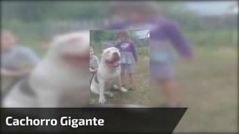 Cachorro Gigante, Essas Crianças Estão Se Divertindo Com Ele!