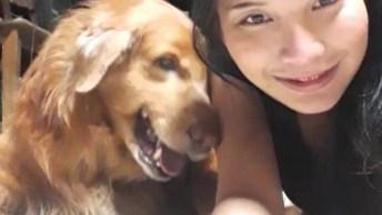 Cachorro Golden Retriever Dando Amor E Alegria Para Sua Tutora!