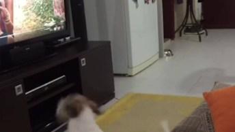 Cachorro Gosta Da Música Despacito, Veja O Que Ele Faz Quando A Música Para!