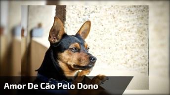 Cachorro Gosta Tanto De Seu Dono, Que Pega Até Ônibus Para Ir Atras Dele!