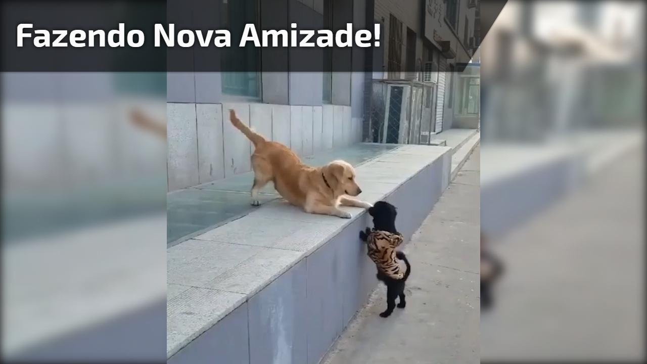 Cachorro grande brincando com cachorrinho pequeno - Uma fofura!
