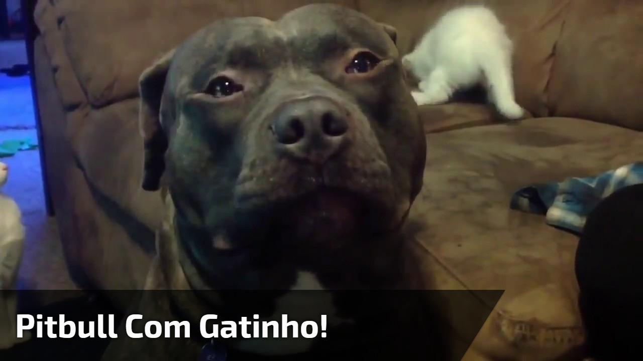Cachorro grande brincando com filhotinho de gato, olha só que fofura!!!