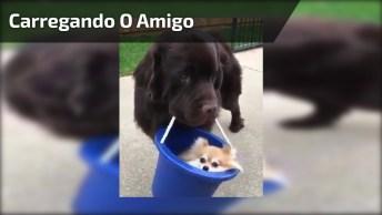 Cachorro Grande Carregando Cachorro Pequeno No Balde, Confira!