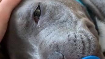 Cachorro Grande Com Carinha De Bebê, Olha A Chupeta Na Boca Que Fofura!