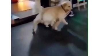 Cachorro Grande Tomando Conta Do Irmãozinho Pequeno, Que Cena Fofinha!