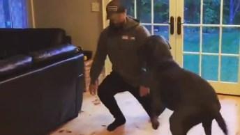 Cachorro Imita O Dono Fazendo Exercício, Como Ele É Engraçado!