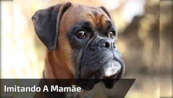 Cachorro Imitando A Dona, Muito Engraçado, Hahaha, Vale A Pena Conferir!