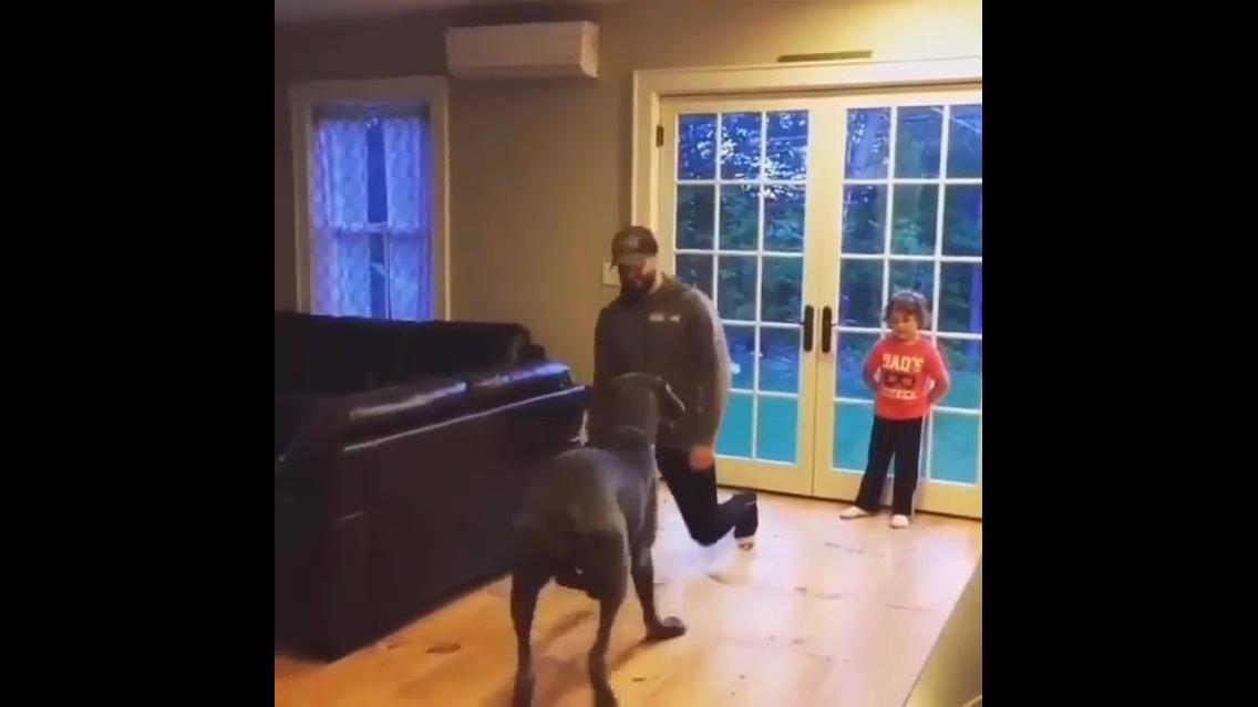 Cachorro imitando movimentos do humano