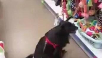 Cachorro Indeciso Na Loja De Pet Shop, Parece Mulher Em Loja De Roupa!