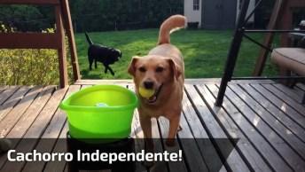 Cachorro Independente, Veja Como Ele Faz Para A Bolinha Ser Atirada!