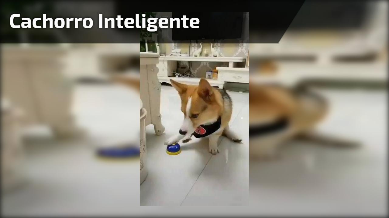 Cachorro inteligente
