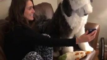 Cachorro Intrigado Com Vídeo No Celular, Olha Só Que Fofinho!
