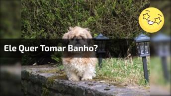 Cachorro Invocado Com A Toalha, Será Que Ele Não Quer Tomar Banho?
