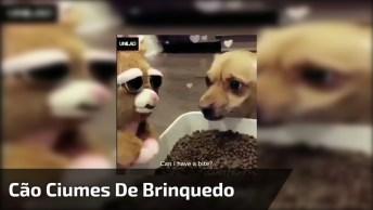 Cachorro Invocado Com Bichinho De Pelúcia Que Quer Comer A Sua Comida!