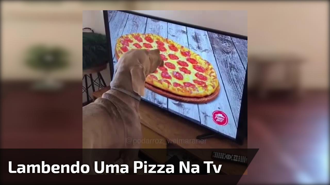 Lambendo uma pizza na tv