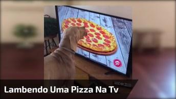 Cachorro Lambendo Uma Pizza Na Televisão, Parece Estar Boa Essa Pizza Hein!