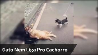 Cachorro Latindo Em Gato, O Bichano Parece Nem Se Preocupar!