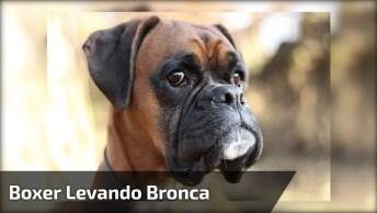 Cachorro Levando Bronca De Sua Dona Por Que Destruí A Caminha, Olha A Cara Dele!