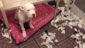 Cachorro Levando Bronca, Mais A Carinha É Tão Meiga Que Não Da Coragem!
