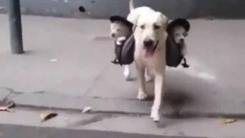 Cachorro Levando Filhotes Para Passear Dentro De Bolsinha Especial, Confira!