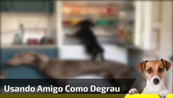Cachorro Maior Ajuda Seu Amiguinho Menor A Roubar Comida Na Geladeira!