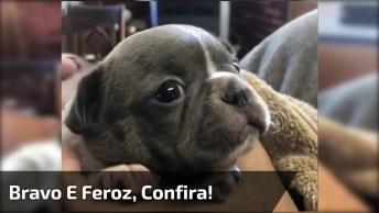 Cachorro Mais Bravo E Feroz Que Vai Ver Hoje, Dá Até Medo. . .