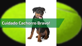 Cachorro Mais Bravo Que Verá Hoje, Ou Não Né Hahaha, Confira!