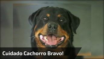 Cachorro Mais Bravo Que Você Já Viu, Cuidado Cenas Fortes!