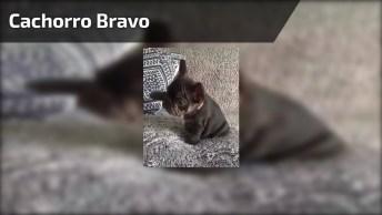 Cachorro Mais Bravo Que Você Já Viu Na Vida, Tome Cuidado Para Não Se Assustar!
