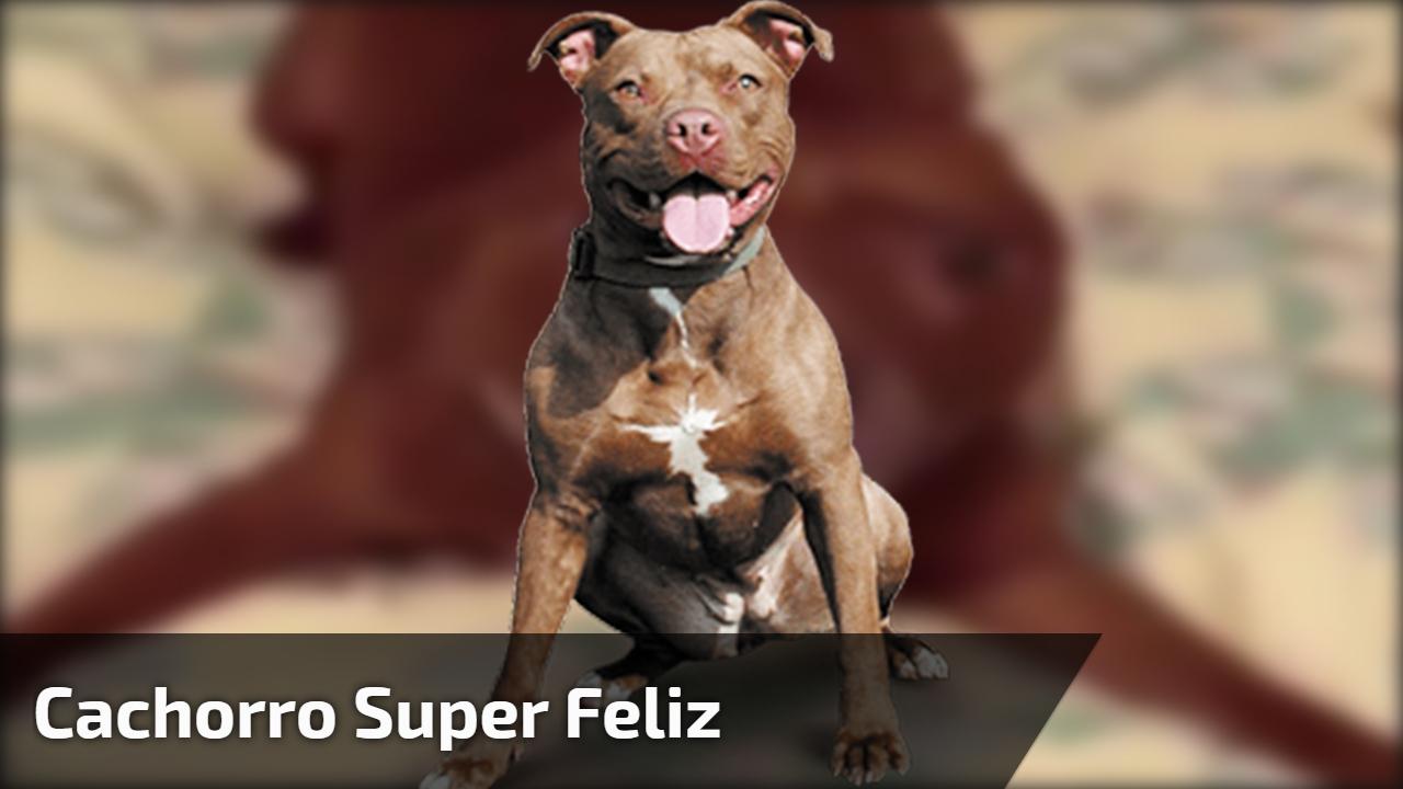 Cachorro super feliz