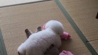 Cachorro Mais Fofinho Do Mundo E Seu Ursinho, Compartilhe No Facebook!
