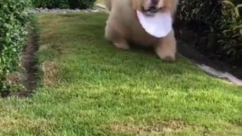 Cachorro Mais Lindo E Fofo Para Compartilhar No Facebook!