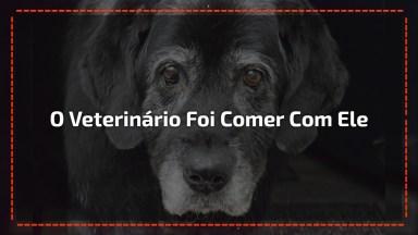 Cachorro Maltratado Não Comia, Então O Veterinário Foi Comer Com Ele, Confira!