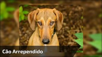 Cachorro Mata Um Pombo E Depois Fica Com Cara De Arrependido!