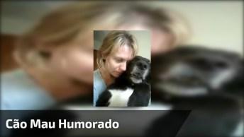 Cachorro Mau Humorado, Olha Quanta Braveza Deste Animal, Hahaha!