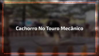 Cachorro Montando Touro Mecânico, Ele Manda Muito Bem, Confira!