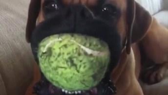 Cachorro Mordendo Brinquedo Com Barulho Irritante, Quem Aguenta Isso?