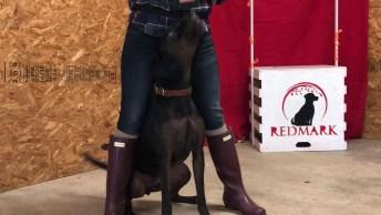 Cachorro Muito Bem Treinado E Inteligente, Ele Faz Show Em Qualquer Lugar!