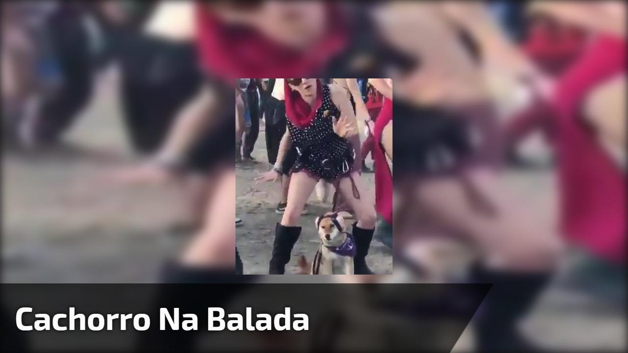 Cachorro na balada