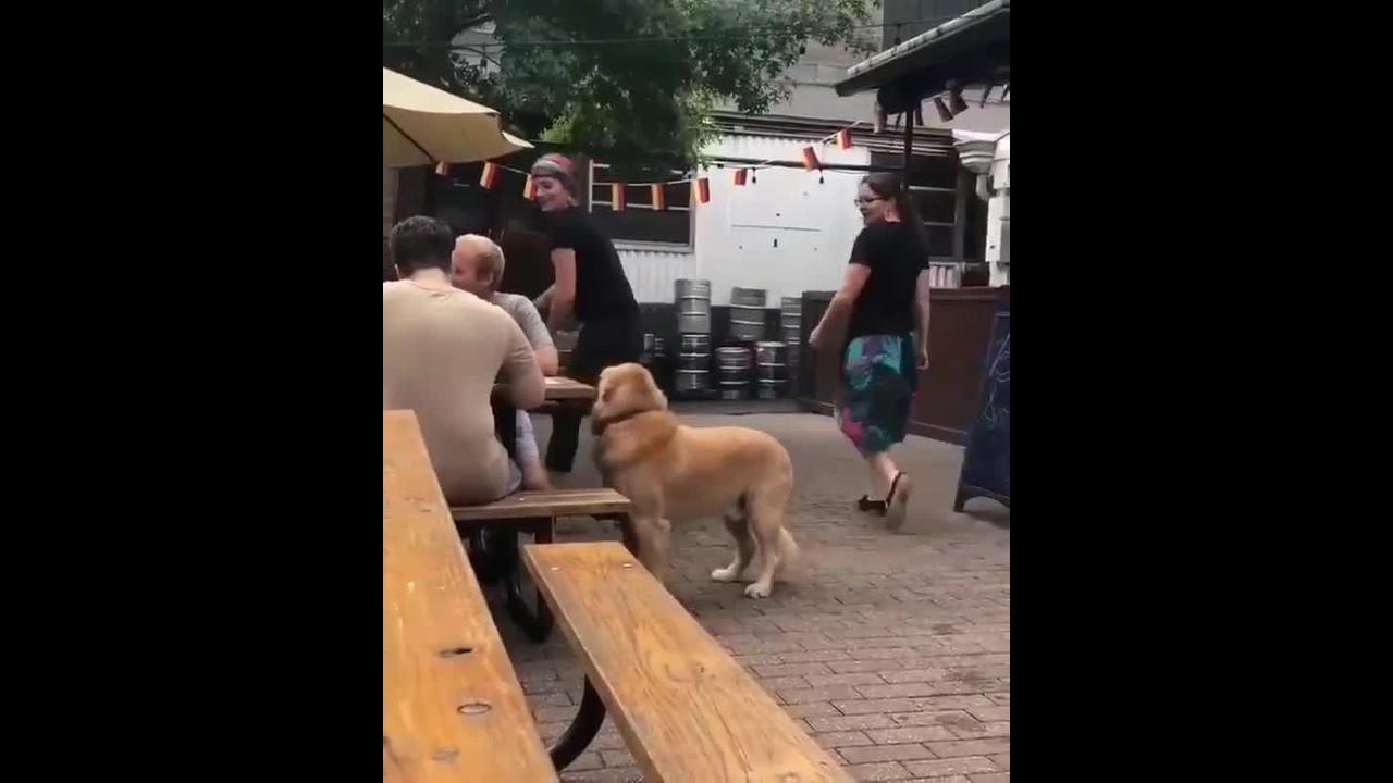 Cachorro na mesa esperando o almoço