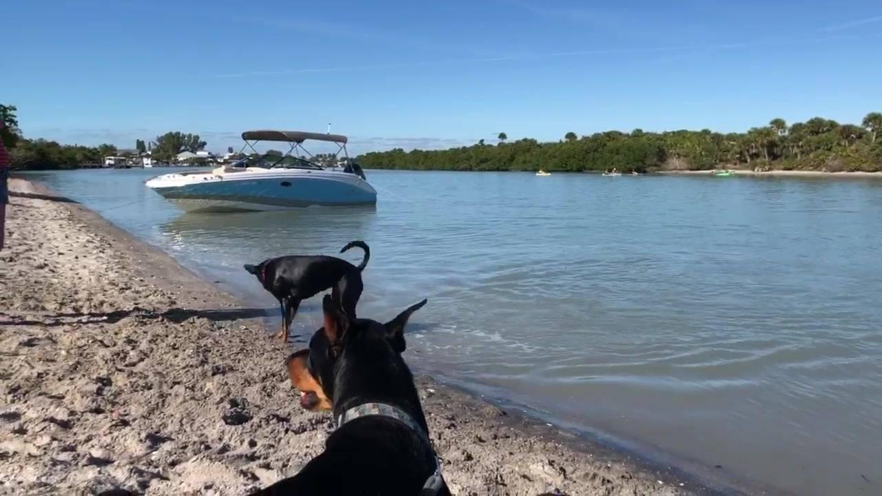 Cachorro nada para poder pegar o graveto na água