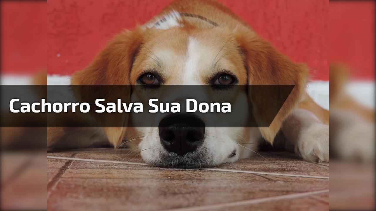 Cachorro salva sua dona