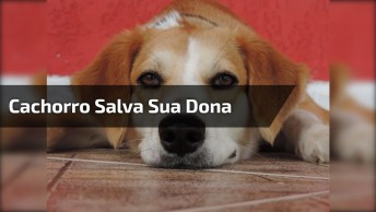 Cachorro Nada Pelo Lago Para Salvar Sua Dona, Olha Só Que Coisinha Linda!