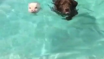 Cachorro Nadando Com Porquinho, Que Delicia Para Se Refrescar!