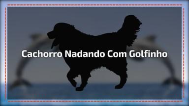 Cachorro Nadando Com Um Golfinho, Que Amizade Mais Linda, Confira!