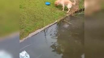 Cachorro Nadando Em Lago, Veja Como Ele Gosta De Mergulhar E Se Diverte Na Água!