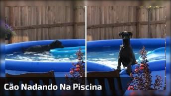 Cachorro Nadando Na Piscina, Olha Só Que Amiguinho Mais Inteligente!