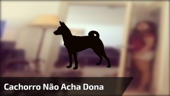 Cachorro Não Consegue Achar A Humana Atrás Da Porta, Que Isso Nico!